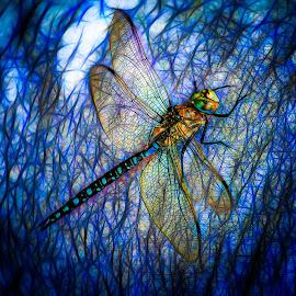 Dragonfly by Dave Lipchen - Digital Art Animals ( dragonfly )