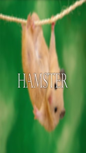 Hamster Wallpaper HD Complete - screenshot