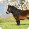 Horse Ponny Wallpaper APK for Ubuntu