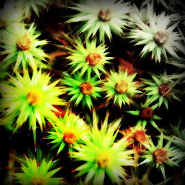 Small Spiky Flowers by Devon Andriola - Nature Up Close Other plants ( spikes, nature, macro photography, green, plants )