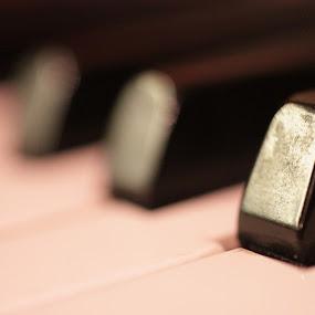 Keys of Life by Nick Massar - Artistic Objects Other Objects ( macro, piano, white, nickolasmassar, black )