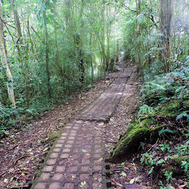 Hiking Path by Gail Marsella - Landscapes Forests ( tropical, path, costa rica, rainforest, hiking )