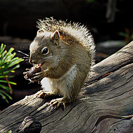 Snack Time!! by Carrie Cadenas - Animals Other ( squirrel )