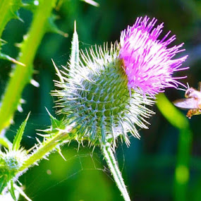 Beeautiful  by Amanda Daly - Flowers Single Flower