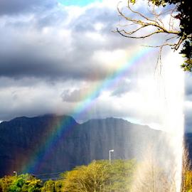 Rainbow fountain ...  by Desiree Havenga - Nature Up Close Gardens & Produce (  )