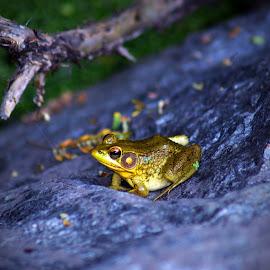 by John Ireland - Animals Amphibians