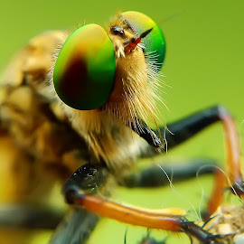 Robberfly by Willy Widarma - Instagram & Mobile Android