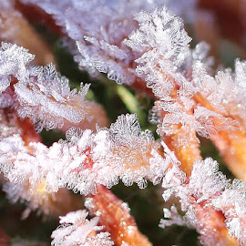 Frost by РАЙНА СИНДЖИРЛИЕВА - Nature Up Close Water