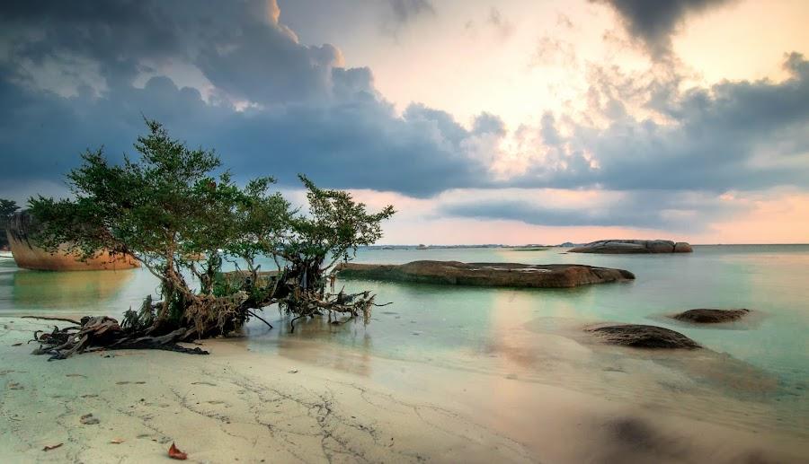 Eden by Fabianus Duddy - Landscapes Beaches