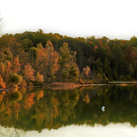 Ever Green by Kathy Woods Booth - Landscapes Waterscapes ( michigan, dawn, green, reflections, daybreak )