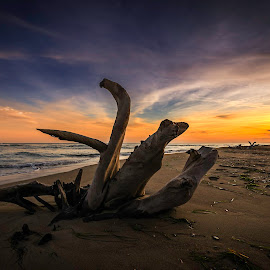 The driftwood... by Bouras Panagiotis - Landscapes Sunsets & Sunrises ( clouds, water, driftwood, sky, wood, greek, colors, sunset, greece, sea, sun )