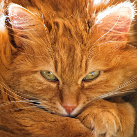 Kitty by John Phielix - Animals - Cats Kittens