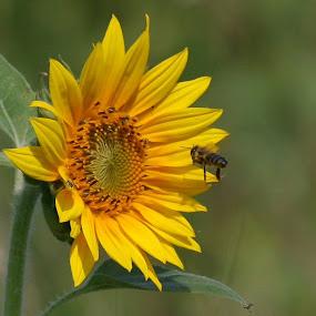 by Radomir Perin-Rasa - Flowers Flowers in the Wild