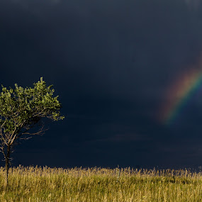 After the Storm by Steve Outing - Landscapes Prairies, Meadows & Fields ( clouds, grassland, tree, colorado, plains, boulder, storm, sunlight, rainbow,  )
