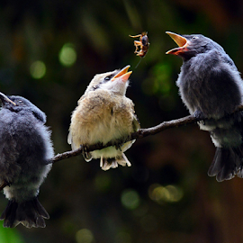 Feeding time #3 by Sigit Purnomo - Animals Birds (  )