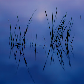 Serenity.... by Charles Grubbs - Landscapes Waterscapes ( reflection, reeds )