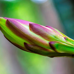 by Rob Whidden - Flowers Flower Buds
