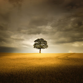 Alone by Dan Allen - Landscapes Prairies, Meadows & Fields ( field, tree, storm, nottingham, lonely )