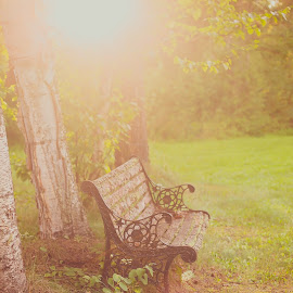 Antique Bench by Angie Braconnier - Artistic Objects Other Objects ( bench, vintage, sunset, sun flare, antique )