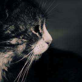 by Vlad Shulzhenko - Animals - Cats Portraits