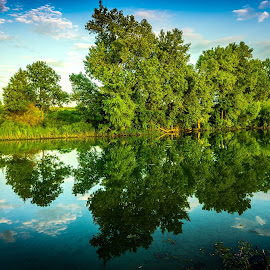 Yankee Hill Lake by Mike Hotovy - Nature Up Close Trees & Bushes