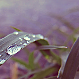 Macro rain drops leaaves by Dragan Dvorski - Novices Only Macro ( macro, grass, nature up close, raindrops, rain drops, leaves, rain )