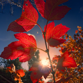 The Last Sun of Autumn by Charles Brooks - Nature Up Close Leaves & Grasses ( botanical gardens )