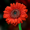 DSC04324a.jpg