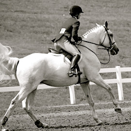 Competition! by Judy Laliberte - Novices Only Sports ( horseback riding, girl, horse, action, b & w,  )