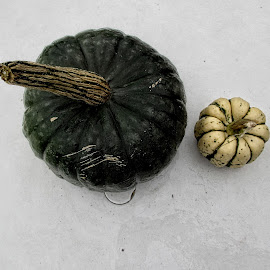 OLI gourd 13 by Michael Moore - Nature Up Close Gardens & Produce