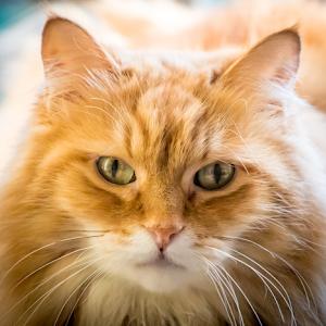 High Key Cat 31 12 17.jpg