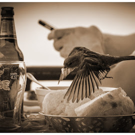 by Nenad Borojevic Foto - Food & Drink Cooking & Baking ( dish, ashtray, spoon, tureen, hand, beer, sky, bread, scoop, glass, mobile phone, eye, deer, wing, plate, bottle, sparrow, bird, food, crumb, tray, paten, flagon, mobile, river )