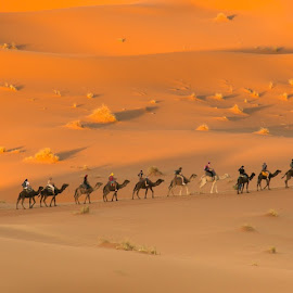 Camel ride in the Sahara Desert by Natalia Dobrescu - Animals Other ( discover, explore, dune, ride, canon, adventure, sand, sahara, golden hour, camel, sunset, animal, morocco, sahara desert, desert, travel, landscape, maroc )