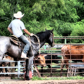 Roping Fun by Linda Brintzenhofe - Sports & Fitness Other Sports ( rider, practice, horse, sport, cattle )