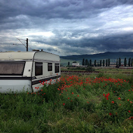 Trailer by Claudiu Petrisor - Transportation Other ( clouds, trailer, sky, grass, romania, poppies, abandoned )