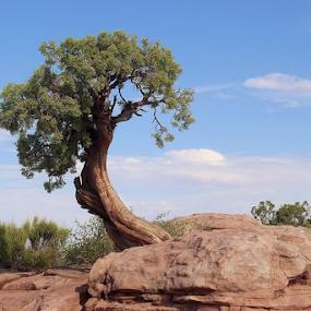 Tree All Alone by Tony Huffaker - Nature Up Close Trees & Bushes ( tree, rocks )