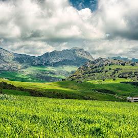 El torcal  by Inna Fangel - Landscapes Mountains & Hills ( spain, mountain, green, eltorcal, nature, travel, landscape, summer )