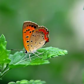 butterfly by Ujang Reborn - Animals Other