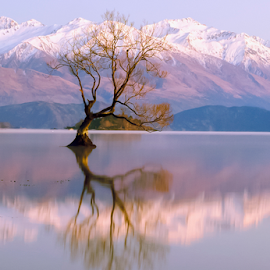 The Lonely Tree and The Remarkables ... by Anupam Hatui - Landscapes Waterscapes ( wanaka, reflection, dawn, south island, tree, waterscape, morning, the remarkables, lake wanaka, new zealand, lonely tree )