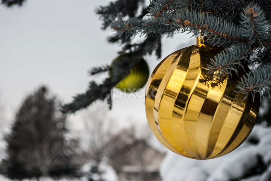 Glowing globes by Kyley Hansen - Public Holidays Christmas ( winter, pine tree, snow, christmas, globe )