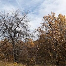 Есен by Georgi Kolev - Novices Only Landscapes ( небе., цветове., есен., време., дървета. )