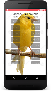 Canary Bird Sounds & Singing - screenshot