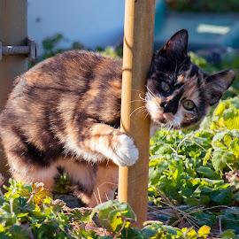 I need a hug by Patti Cooper - Animals - Cats Kittens ( orange, kitten, cat, tri colored, black, tortishell )