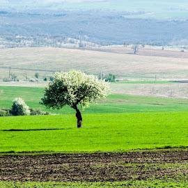 Treе by Kristian Krustev - Nature Up Close Trees & Bushes ( nature, tree, green, spring )