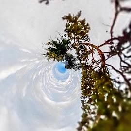 Heavenly Power by Gia Gee - Digital Art Things ( trees bending, heavens, clouds, trees twisting, trees )