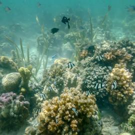 Hidupan Batu Karang by Daimasara Abdullah - Landscapes Underwater