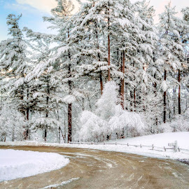 winter by Adina White - Landscapes Weather ( winter, cold, snow, white, trees )