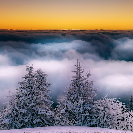 Sunrise above the clouds by Laurentiu Soare - Landscapes Sunsets & Sunrises ( clouds, mountains, winter, colorful, snow, trees, sunrise )