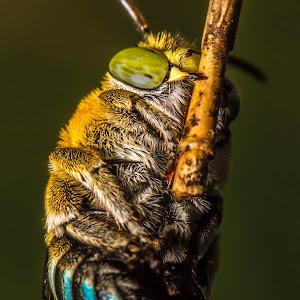 bee hanging.jpg