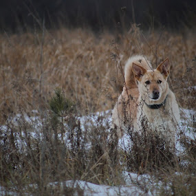 Wild Again by David Vanveen - Animals - Dogs Playing ( animals, funny, cute, dog )